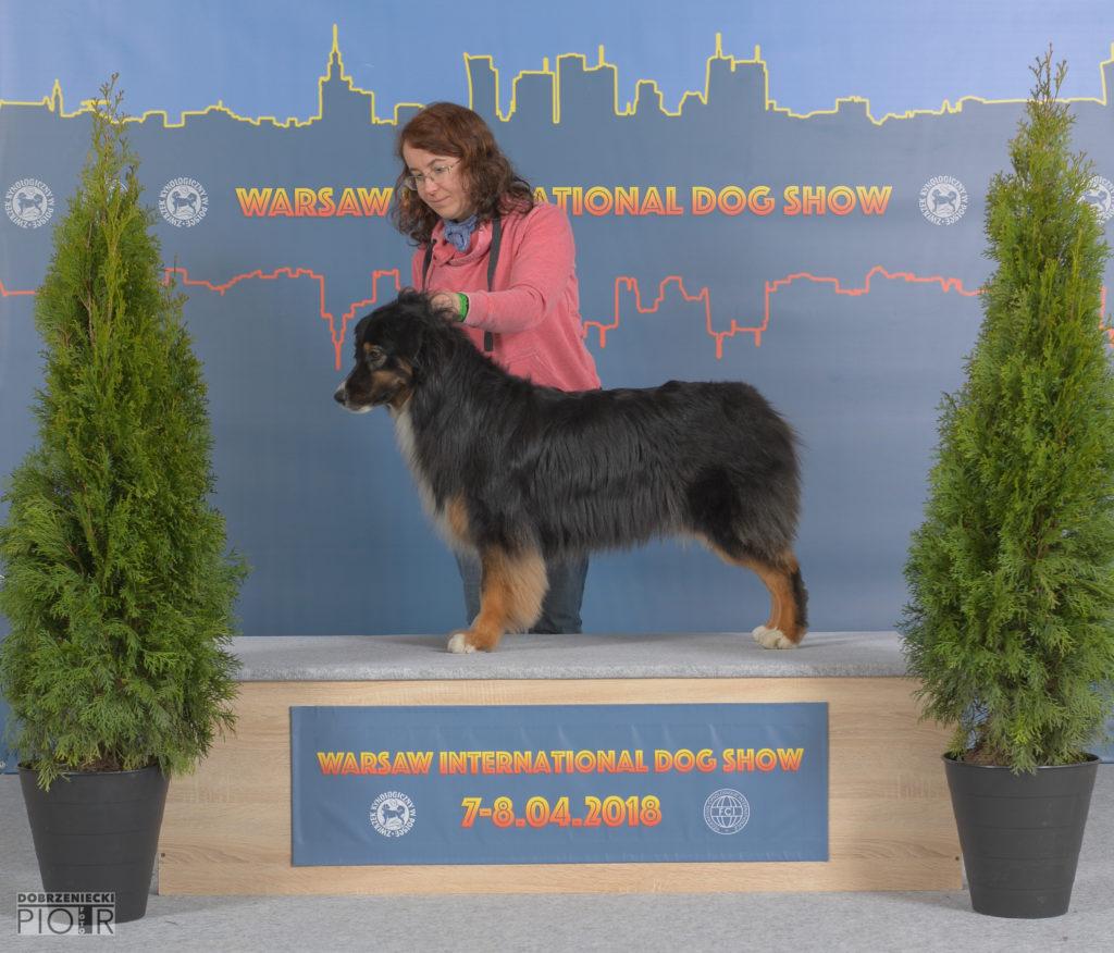 Warsaw International Dog Show 7-8.04.2018-239